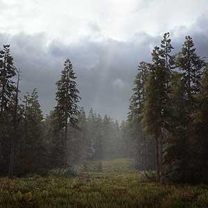 o deserto e as florestas