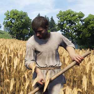 Culturas agrícolas da Medieval Dynasty