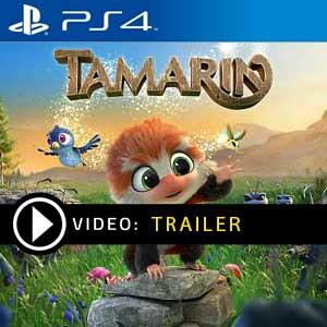 Comprar Tamarin PS4 Comparar Preços